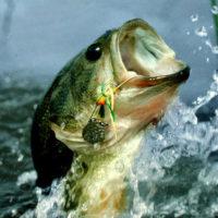 Fishing Tackle/Tools